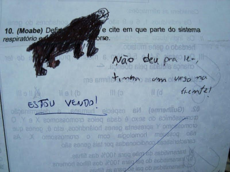urso na prova