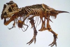 fossil de tiranossauro rex