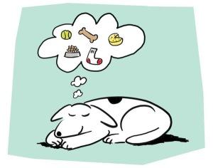Também não é aquela fase do sono em que suas memórias estão sendo organizadas e você começa a sonhar.