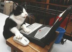 gato-computer-gif